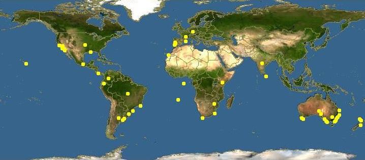 Acacia Longifolia Dmt Nexus Wiki