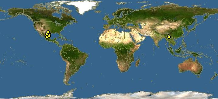 Acacia Rigidula Dmt Nexus Wiki